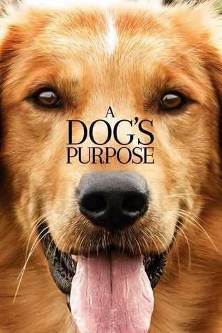 A Dog's Purpose Soundtrack